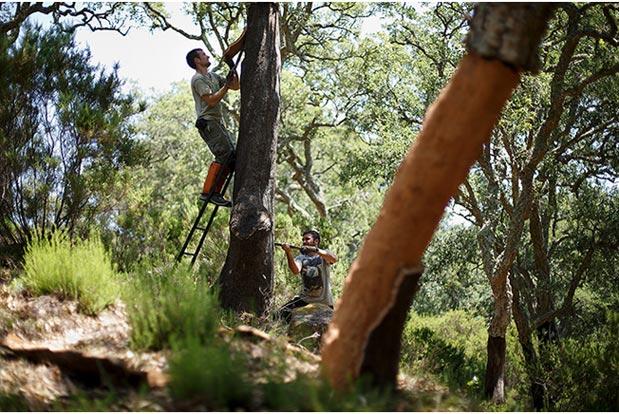Anh Juan và anh Francisco đang cưa vỏ của một cây sồi