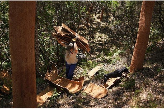 Anh Juan chồng các vỏ cây sồi cưa được để chở về nhà máy.