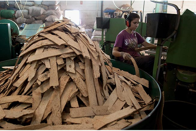 Ngoài lề một tí, các xưởng công nghiệp này không chỉ sản xuất mỗi nắp rượu, lỗ chết, họ còn tận dụng nguyên vật liệu để làm một vài món khác như miếng lót giày, vòng chèn trong nắp bình gas. Trong hình: một nữ công nhân điều khiển máy cắt, bào từng vỏ cây đã mềm thành nhiều lát mỏng để làm thành các món đồ gia dụng khác.