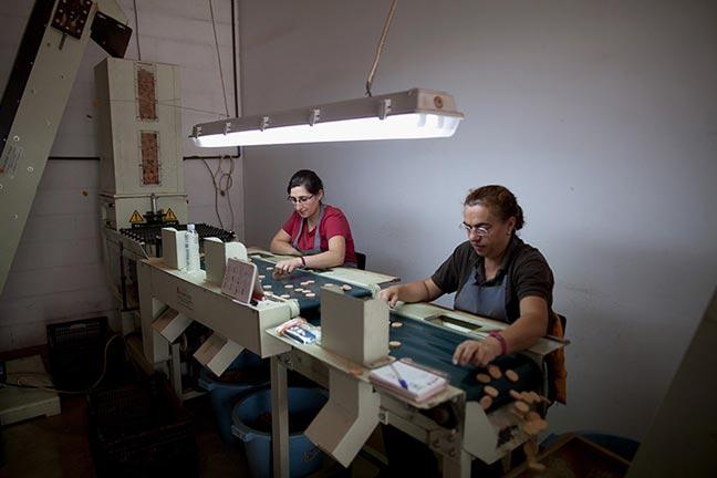 Hai chị công nhân Gloria và Cecillia cắt những lát vỏ cây mỏng thành miếng tròn để làm vòng chèn dưới nắp bình gas (ngăn cho gas không thoát ra ngoài, đề phòng cháy nổ)