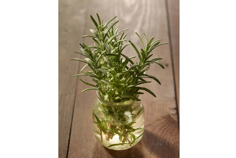 Rosemary-in-jar
