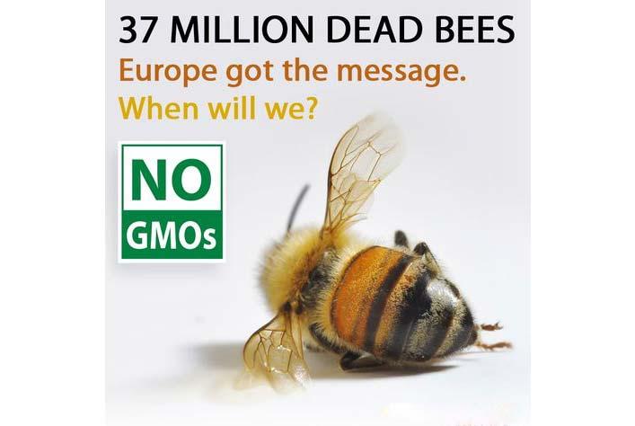 37mil-dead-bees.jpg