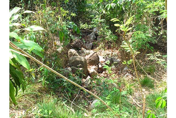 Cocoa-farm-dried-up-river.jpg