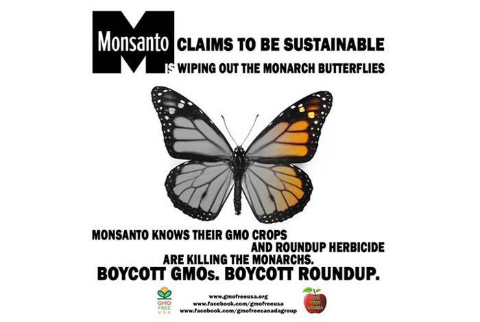 boycott-GMO-save-monarch.jpg